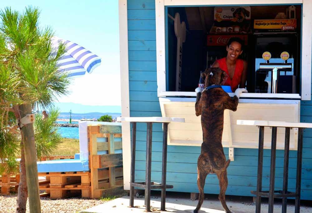 Einmal bitte ein Hundebier und ein Eis für Herrchen: Am Luxusstrand von Crikvenica sind Urlauber mit ihren Hunden besonders willkommen