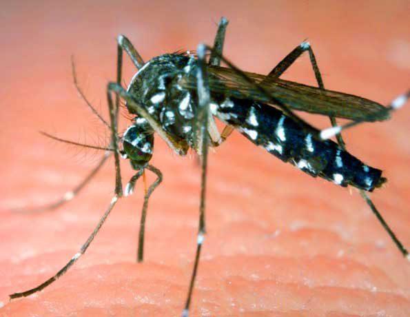Die österreichischen Gesundheitsbehörden haben bisher 27 Zikavirusinfektionen registriert. Trend stagnierend