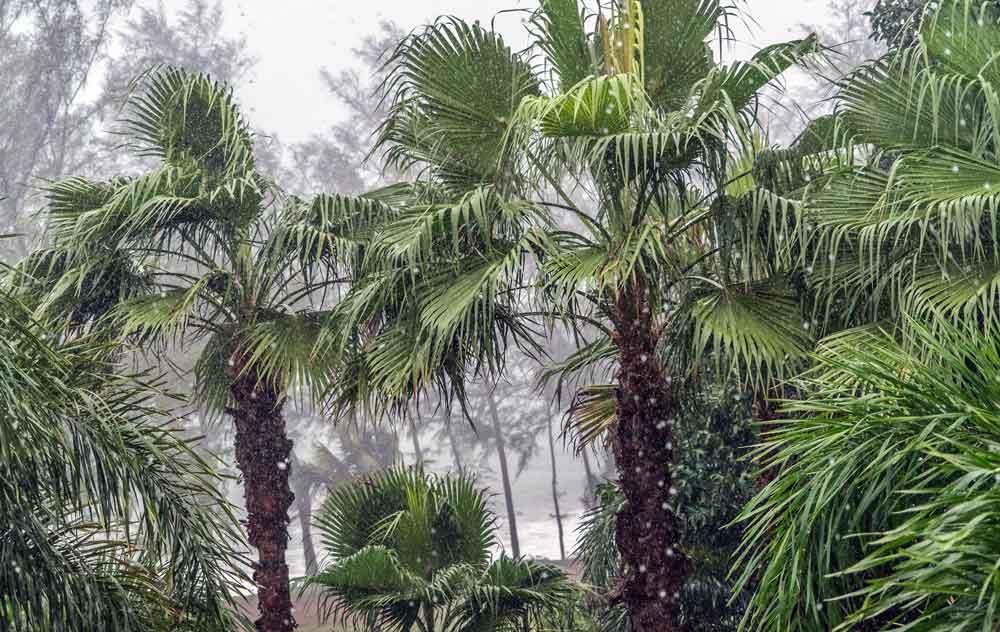 Weiter Regenwetter in den beliebten Feriengebieten Koh Samui, Krabi und Phuket(Foto: Michelle Maria, Pixabay)