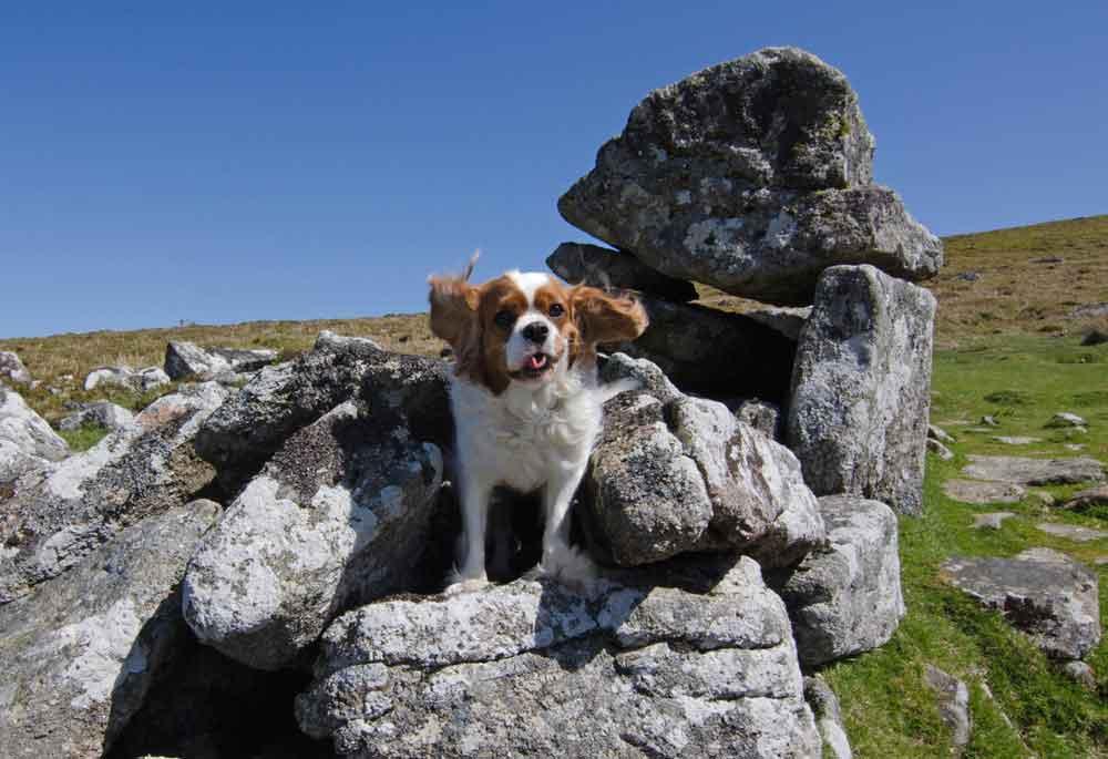 Wanderurlaub mit dem Hund in Südengland: Wo sich Hund und Herrl oder Frauerl entspannen können (Foto: BFS)