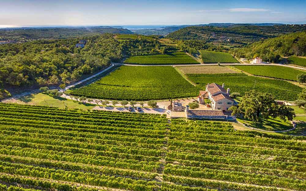 Istrien hat den Wein als Tourismusmotor entdeckt: Ob Kabola, Kozlovic, Coronica oder Trapan – Istriens Spitzenwinzer verführen zu Verkostung von Spitzenweinen