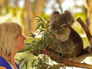 Visit Victoria startet Roadshow. Bild zeigt Frau mit Koala-Bär
