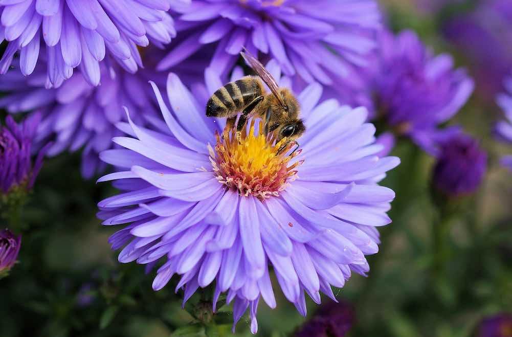 Die Arcotel Hotels unterstützen die Rettung der Bienenvielfalt und Bienenpopulation (Foto: Pixabay)