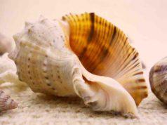 Zu den Souvenirs, die nicht in die Heimat mitgenommen werden dürfen, zählen auch unter Muscheln und Schnecken, die geschützte Arten sein können (Foto: Valentimka auf Pixabay)