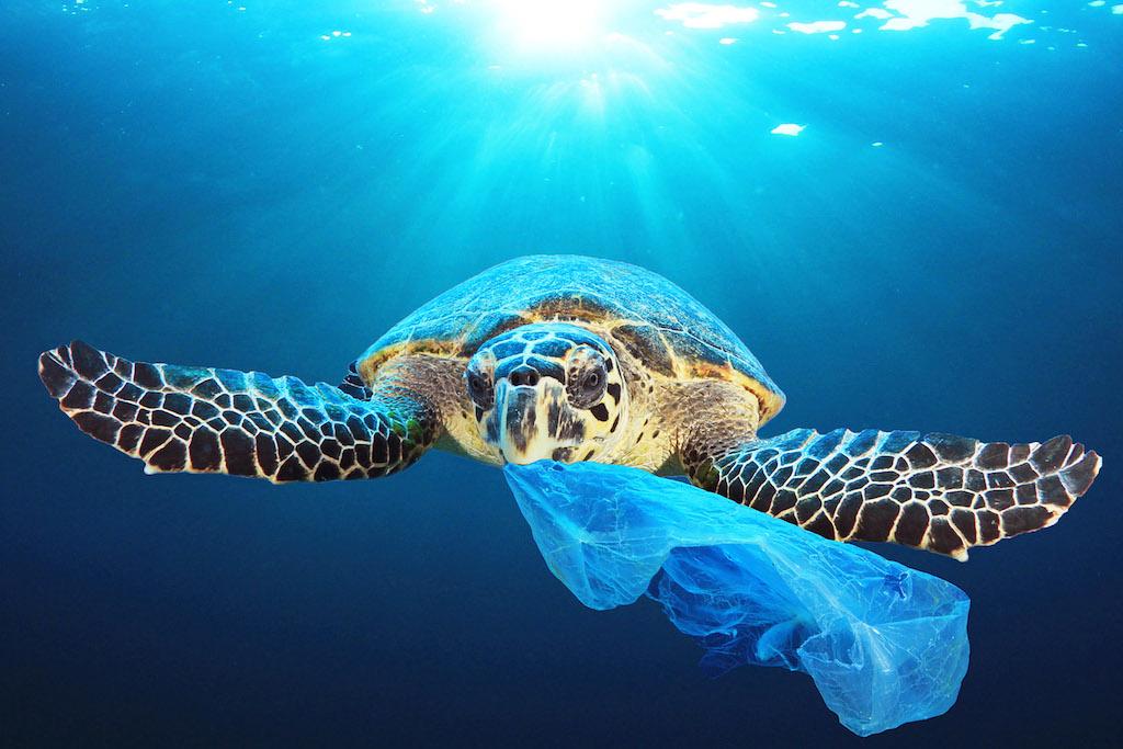 Die Menge der Plastikabfälle in den Meeren wächst ständig, weil der Zersetzungsprozess bei Kunststoffen nur langsam verläuft (Foto: AP Images, EU-EP)