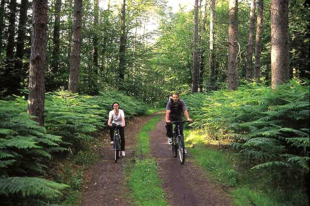 Polens Naturwälder laden im Sommer zu einer kühlen Radtour ein (Foto: POT)