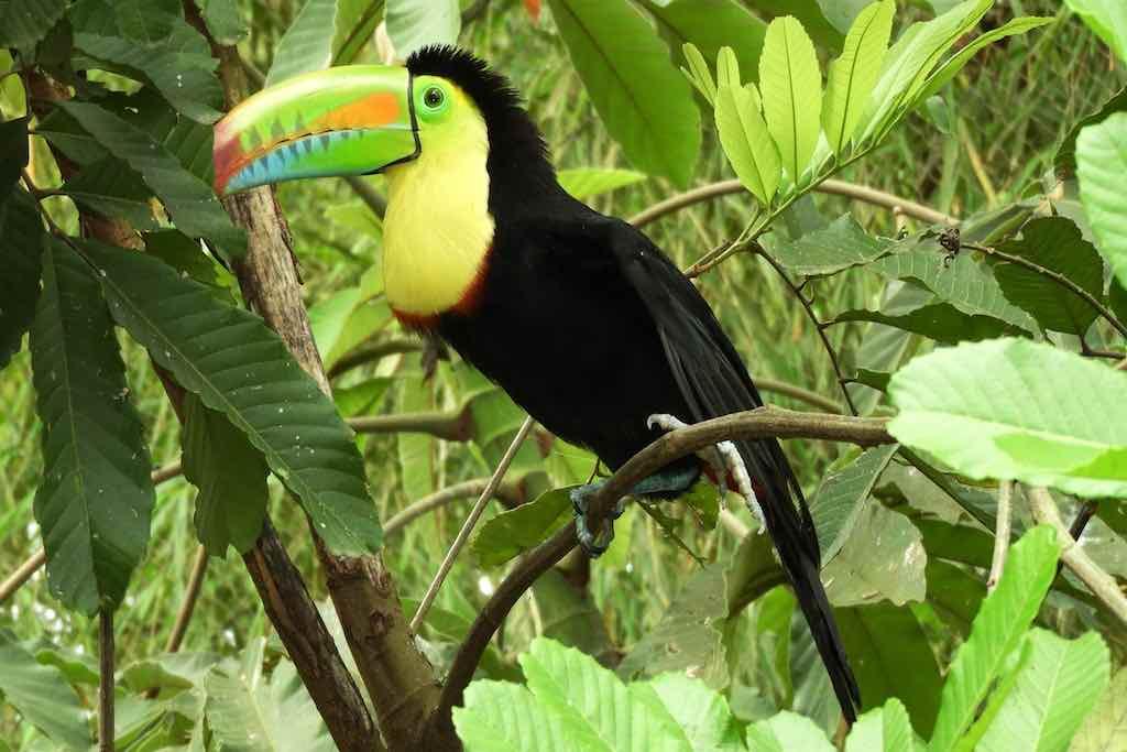 Kreuzfahrt zum Amazonas und in die Karibik: Begegnung mit einer märchenhaften Tier- und Naturwelt